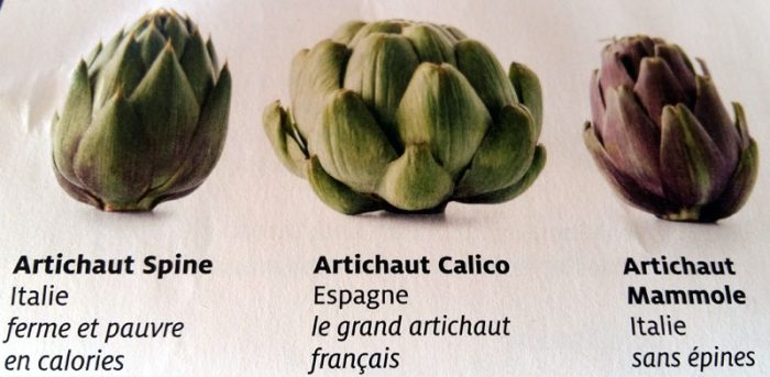 3 sortes d'artichauts courrants
